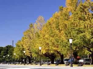 東京都 黄葉した丸の内のイチョウ並木の写真素材 [FYI04761757]