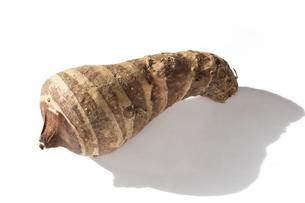 海老芋 京芋 エビイモ 京野菜 白背景の写真素材 [FYI04762044]