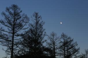 月と木々の写真素材 [FYI04762073]