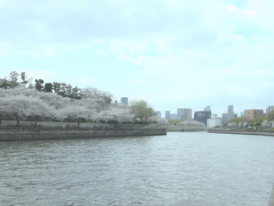 桜と川と街の写真素材 [FYI04762089]