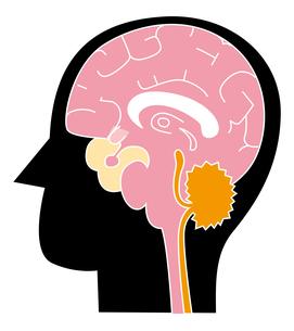 脳 頭部のイラスト素材 [FYI04762098]