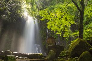 阿蘇白糸の滝の写真素材 [FYI04762295]