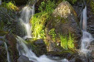南阿蘇村の白川水源の写真素材 [FYI04762302]