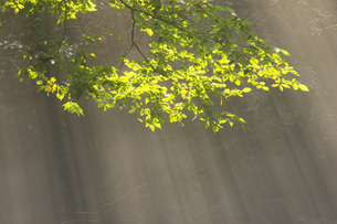 夏の立岩水源公園の写真素材 [FYI04762313]