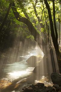 夏の立岩水源公園の写真素材 [FYI04762314]