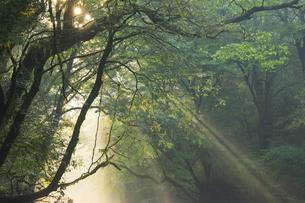 夏の菊池渓谷の写真素材 [FYI04762315]