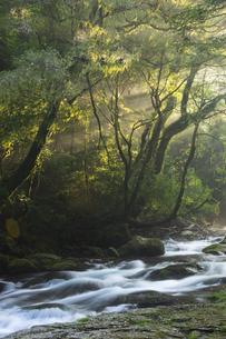 夏の菊池渓谷の写真素材 [FYI04762316]