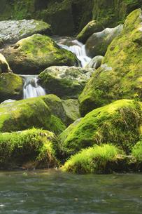 夏の菊池渓谷の写真素材 [FYI04762317]