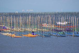 宇土市有明海の海苔の種付けの写真素材 [FYI04762371]