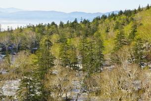 残雪と芽吹きのニセコ連峰の森と積丹の山々の写真素材 [FYI04762379]