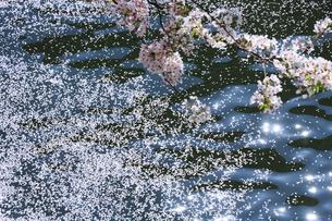 目黒川の桜の写真素材 [FYI04762411]