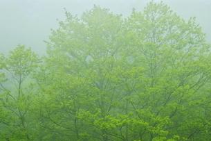 白老川上流域 新緑の森の写真素材 [FYI04762459]