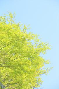 新緑と青空の写真素材 [FYI04762487]