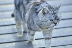 歩く野良猫の写真素材 [FYI04762539]