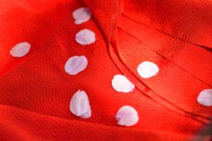 縮緬の布と桜の花びらの写真素材 [FYI04762549]