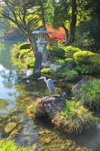 秋の金沢兼六園 ことじ灯籠と霞ヶ池に鷺の写真素材 [FYI04762646]