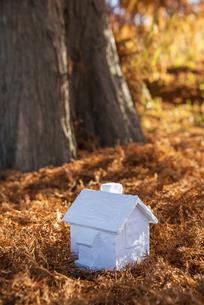 メタセコイアの落ち葉の上に置かれたミニチュアハウスの写真素材 [FYI04762830]
