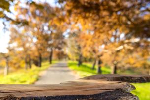 秋イメージ背景素材の写真素材 [FYI04762842]