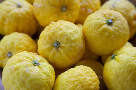 柚子の写真素材 [FYI04762910]