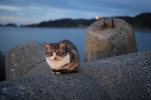 港の猫の写真素材 [FYI04762912]