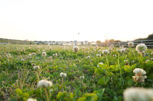 川岸の風景の写真素材 [FYI04762916]