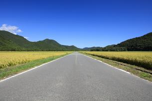 秋晴れの田園風景の写真素材 [FYI04762931]