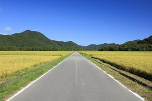 秋晴れの田園風景の写真素材 [FYI04762934]