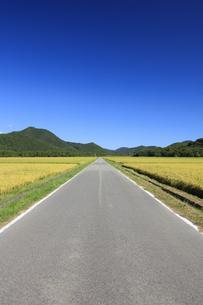 秋晴れの田園風景の写真素材 [FYI04762935]