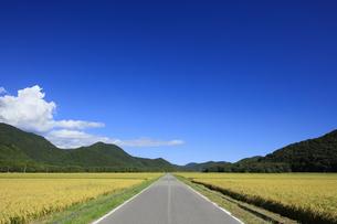 秋晴れの田園風景の写真素材 [FYI04762939]