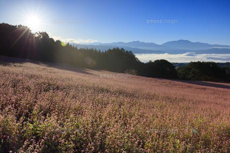 朝日と赤そばの里の写真素材 [FYI04762949]