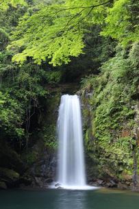 轟の滝の写真素材 [FYI04762984]