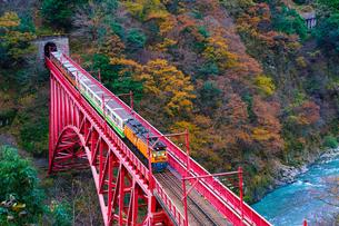 黒部峡谷の紅葉とトロッコ列車の写真素材 [FYI04763093]