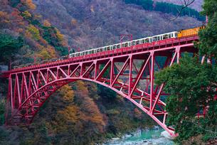 黒部峡谷の紅葉とトロッコ列車の写真素材 [FYI04763094]