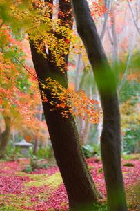 美しい紅葉の庭の写真素材 [FYI04763109]