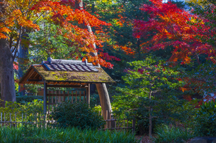 六義園の紅葉の写真素材 [FYI04763587]