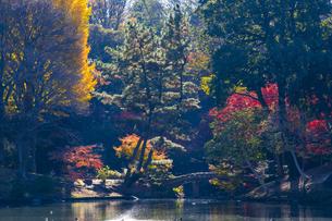 六義園の紅葉の写真素材 [FYI04763595]
