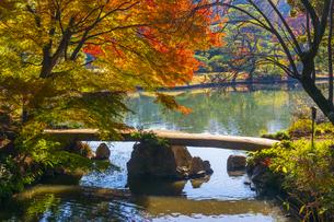 六義園の紅葉の写真素材 [FYI04763599]