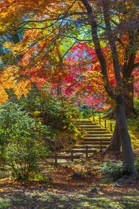 六義園の紅葉の写真素材 [FYI04763611]