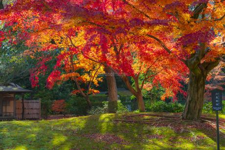 六義園の紅葉の写真素材 [FYI04763612]