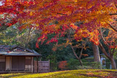 晩秋の六義園の写真素材 [FYI04763619]