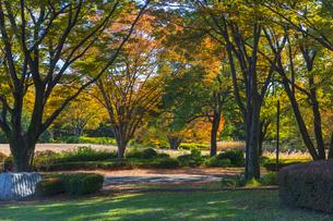 秋の昭和記念公園の写真素材 [FYI04763621]