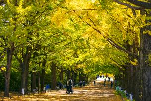 昭和記念公園の銀杏並木の写真素材 [FYI04763624]