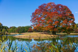 秋の昭和記念公園の写真素材 [FYI04763632]