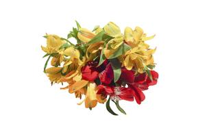 アルストロメリアの花束の写真素材 [FYI04763737]