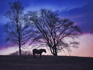 朝焼けと馬の写真素材 [FYI04763746]