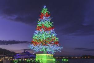 夕暮れのクリスマスツリーの写真素材 [FYI04763807]
