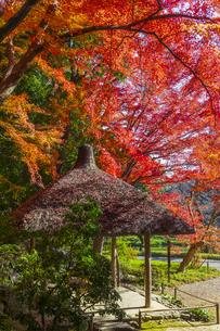 秋の小石川後楽園の写真素材 [FYI04763916]