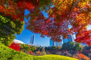 秋の小石川後楽園の写真素材 [FYI04763917]