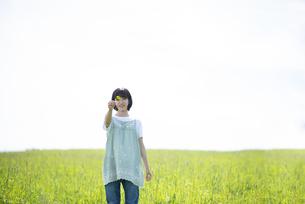 草原で四つ葉のクローバーを見つけたカップル女性の写真素材 [FYI04764697]