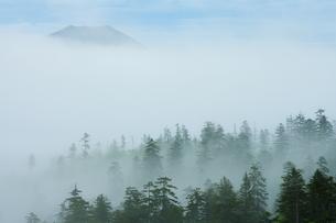知駒岳 霧のアカエゾマツ群生林とピンネシリの写真素材 [FYI04764718]